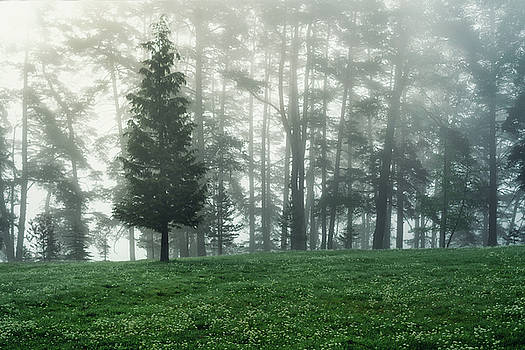 Forest landscape and morning fog in spring by Valentin Valkov