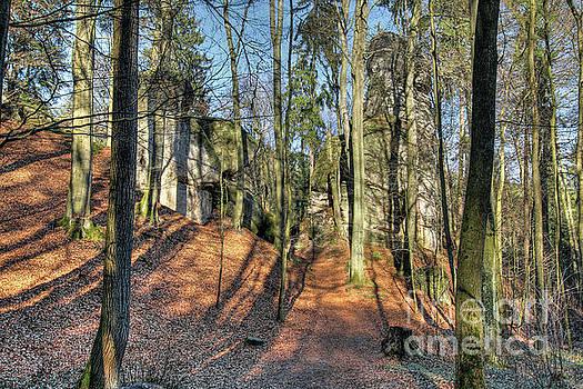 Forest landscape in Bohemian Paradise by Michal Boubin