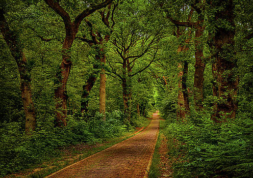 Forest lane in Doorwerth by Tim Abeln