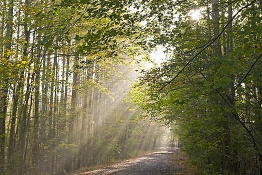 Forest Light by Andrew Kazmierski