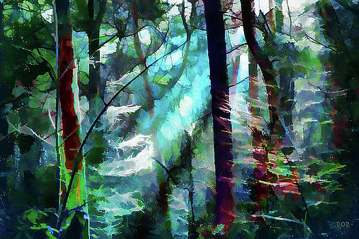 Forest Light by Declan O'Doherty