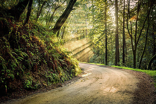 Forest Light by Jason Roberts