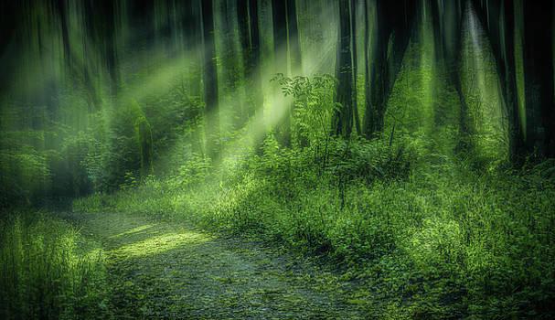 Forest Light Streams by Don Schwartz