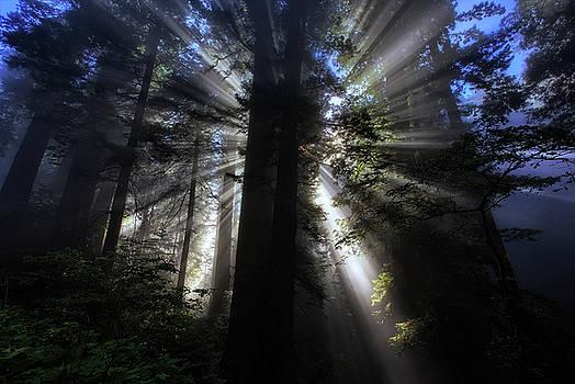 Forest Light by Vincent James