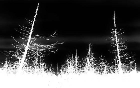 Tim Richards - Forest Marsh N