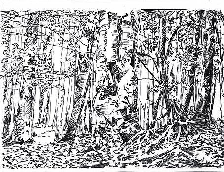Forest by Marta Gawronska