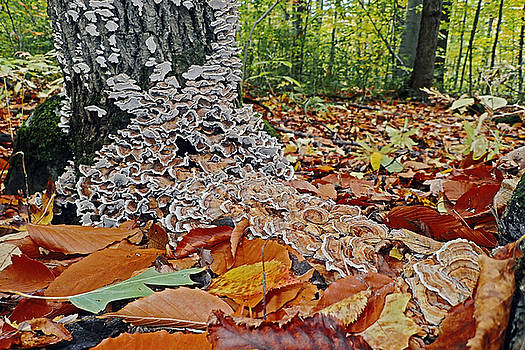 Forest mushrooms by Asbed Iskedjian
