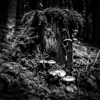 Forest Mushrooms by Cindy Collier Harris