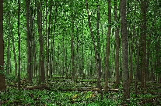 Forest of Green by Nikki McInnes