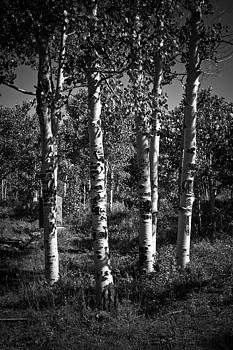 Forest of Memories by Matthew Saindon