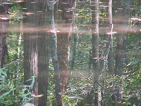 Forest of Mirrors by Ricky  Rayburn