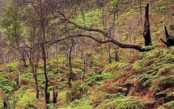 Forest of Mount Patuha by Jeffrey Djayasaputra