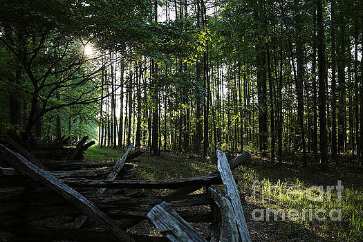 Woods at Yorktown by Rachel Morrison