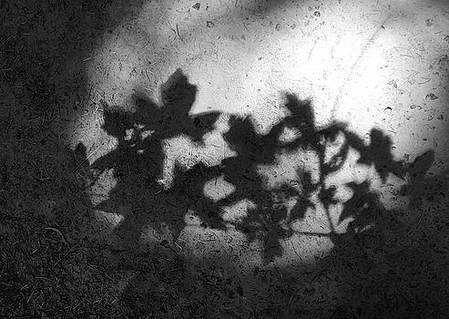 Forest Park Shadow III by Kevin Felts