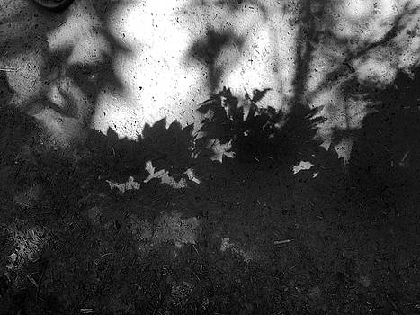 Forest Park Shadows IV by Kevin Felts