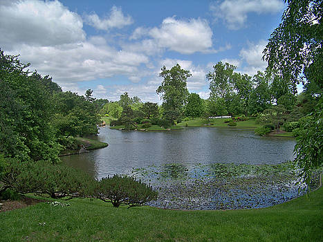 Forest Park View by Julie Grace