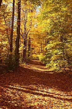 Forest path in autumn by Doris Dumrauf