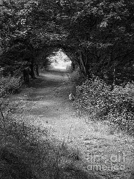 Forest Path by John Edwards