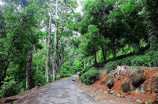 Jenny Rainbow - Forest Path through Greenery. Sri Lanka