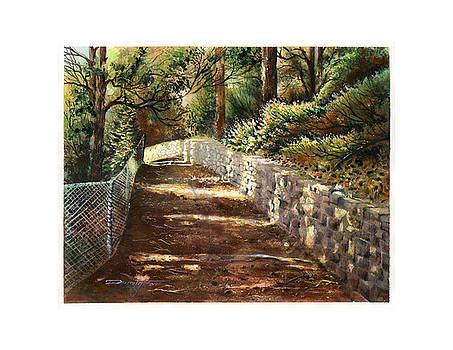 Forest path White Cliff by Dumitru Barliga