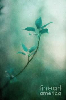 In the deep forest 1 by Priska Wettstein