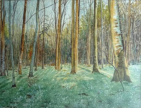 Forest by Rashid Hamza