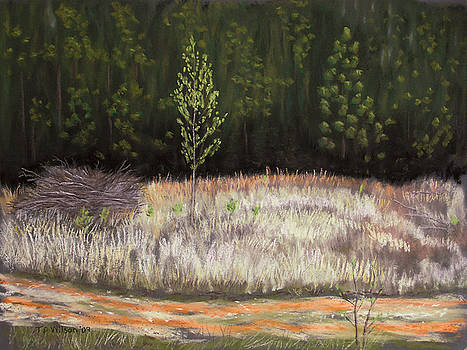 Forest rebirth - pastel by TD Wilson
