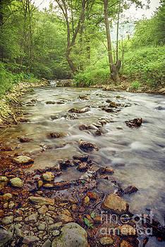 Forest river cascades by Jelena Jovanovic