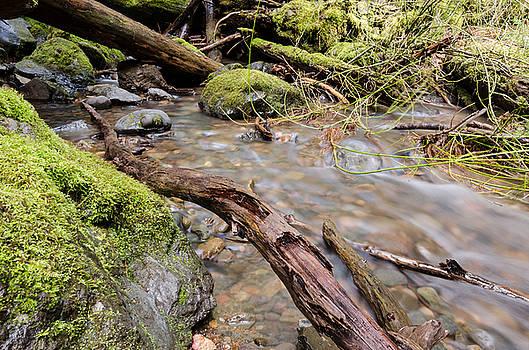 Margaret Pitcher - Forest River Details