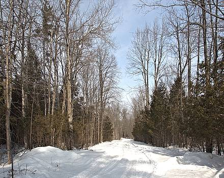 Valerie Kirkwood - Forest Road in Winter