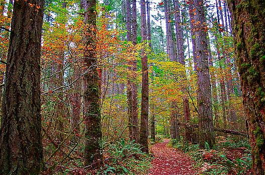 Forest Road by Mark Lemon