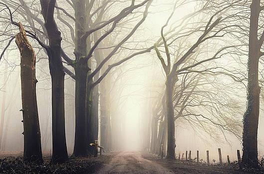 Forest serene by Rob Visser