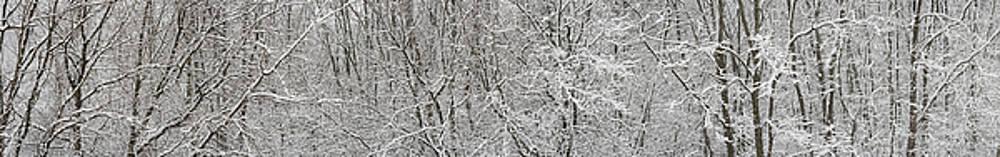 Forest Snowfall by Steve Gadomski