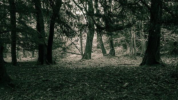 Jacek Wojnarowski - Forest, split toning, black and white photography