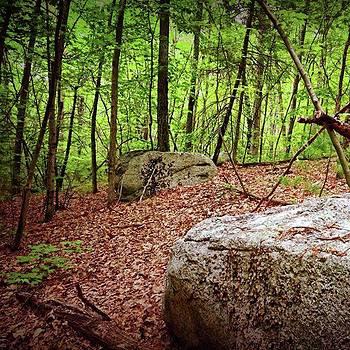 Forest Stones by Amanda Richter