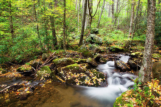 Jill Lang - Forest Stream