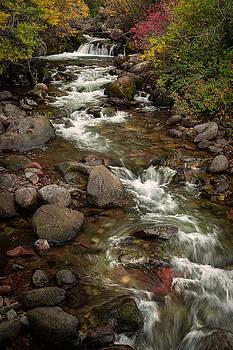 Rick Strobaugh - Forest Stream