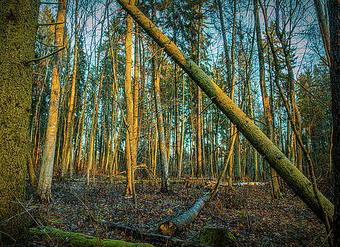 Forest sun #h0 by Leif Sohlman