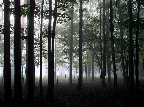 Forest Through the Trees by Doug Hockman Photography