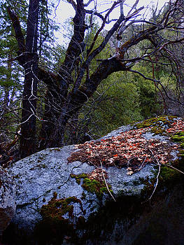Forest Trail 01 2015 A by Walter Fahmy