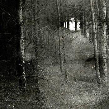 Forest by Vladas Orzekauskas