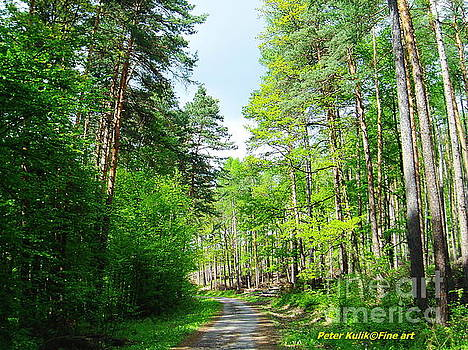 Forest walk 3 by Peter Kulik