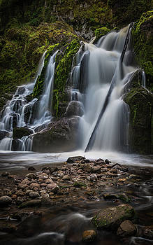 Forest Waterfall by Chris McKenna