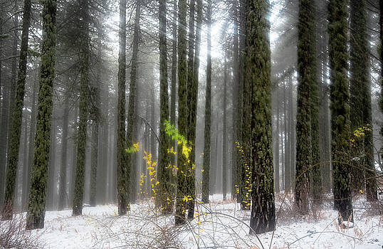 Forest winter dreaming landscape with trees and snow by Michalakis Ppalis