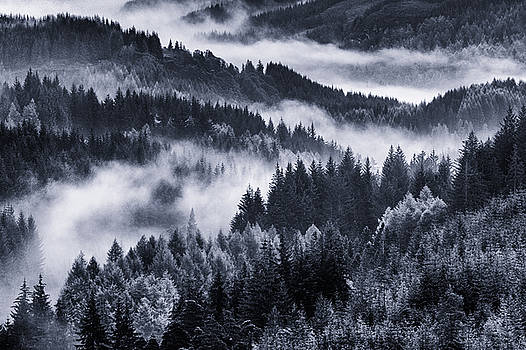 Forest With Fog by Vitor Costa