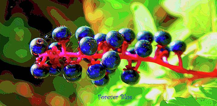 Forever Blue by David Schneider