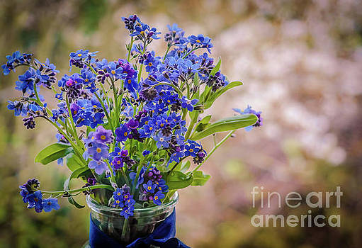 Forget me not by Claudia M Photography