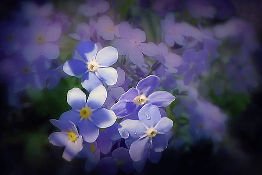 Forget me not haze by Valerie Anne Kelly
