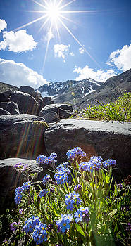 Forget-Me-Not Vignette by Tim Newton