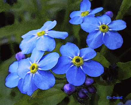 Forget Me Nots by Ed A Gage